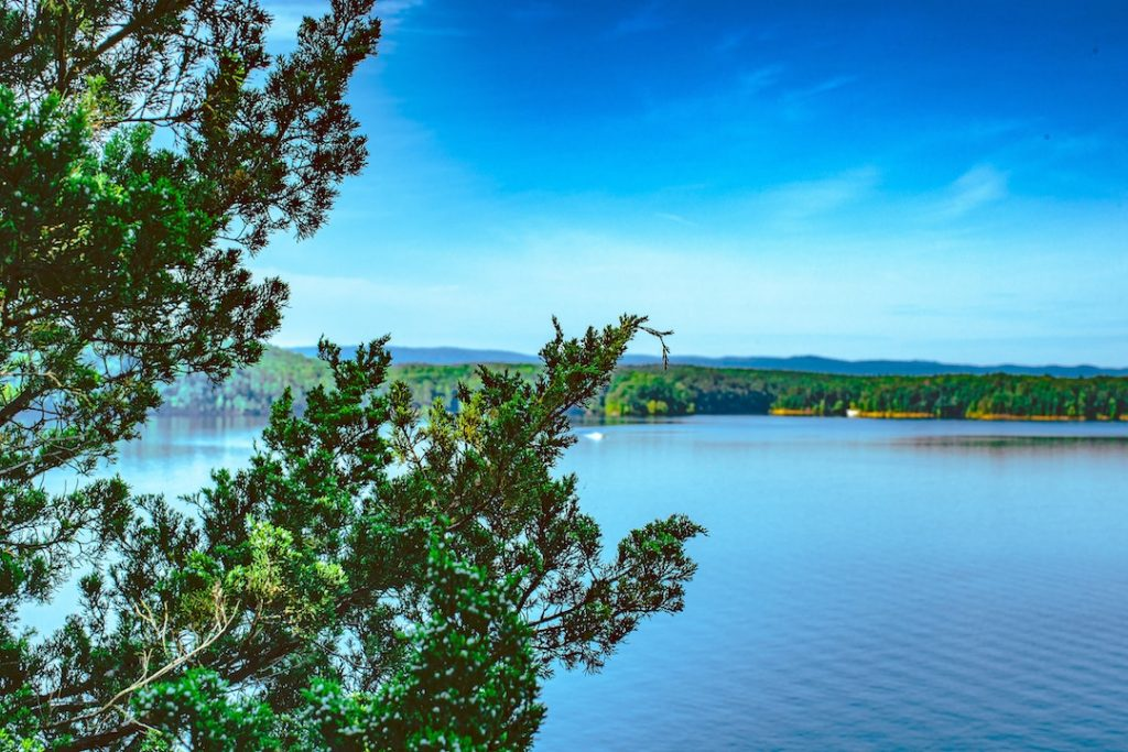 Best boba places in Arkansas